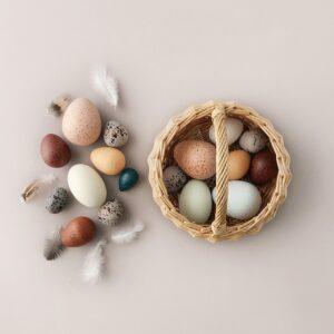 Birds egg toys